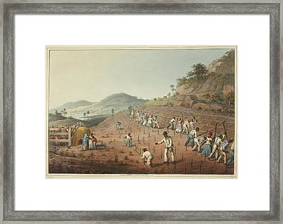 Digging The Cane-holes Framed Print by British Library