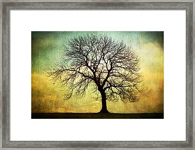 Digital Art Tree Silhouette Framed Print by Natalie Kinnear