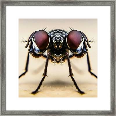 Digital Composite Image Of Housefly Framed Print by Chris Raven / Eyeem