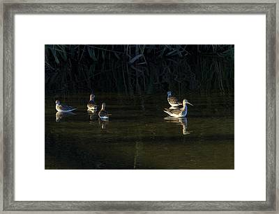 Digital Oil Of Sandpipers Framed Print