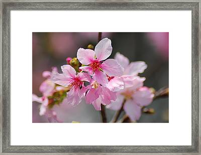 Digital Photography Framed Print