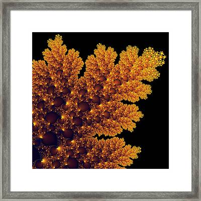 Digital Warm Golden Fractal Leaf Black Background Framed Print