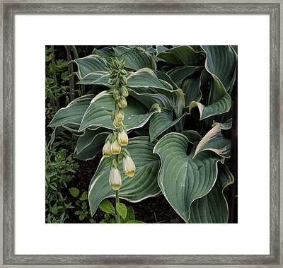 Framed Print featuring the photograph Digitalis by Leif Sohlman