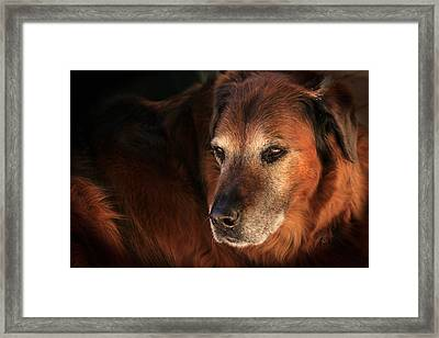 Framed Print featuring the photograph Dignified by Charles Ables