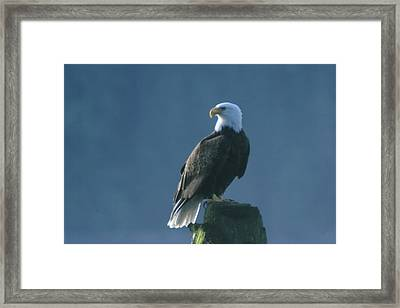 Dignity Framed Print by Jeff Swan