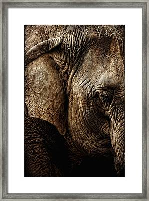 Dignity Of Age In Asian Elephant Study Framed Print by Lincoln Rogers