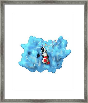 Dihydrofolate Reductase And Folic Acid Framed Print by Ramon Andrade 3dciencia