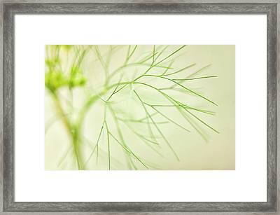 Dill (anethum Graveolens) Leaves Framed Print