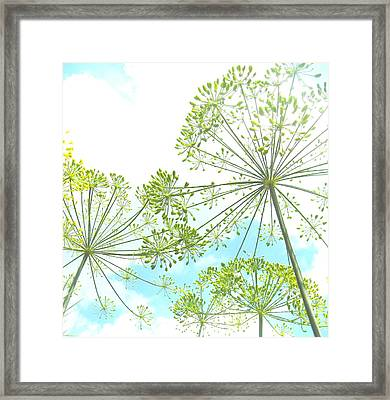Dill Garden Framed Print by Tracy Male