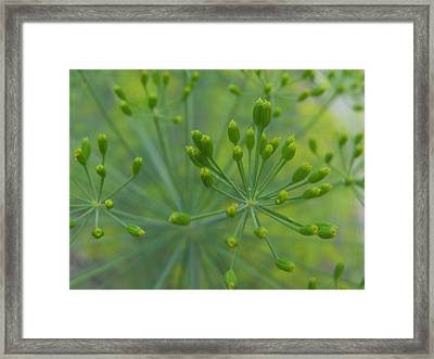 Dilly Framed Print by Tracy Male