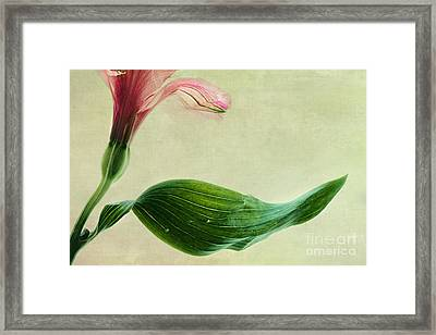 dim colours II Framed Print