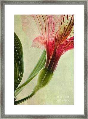 Dim Colours Framed Print