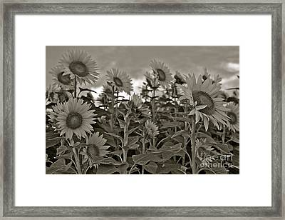 Dimming The Lights Framed Print