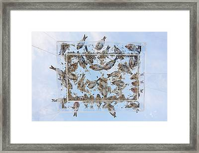 Dining In The Sky Framed Print by Tim Grams