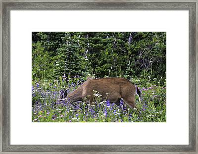 Dining Out Framed Print by Paul Shefferly