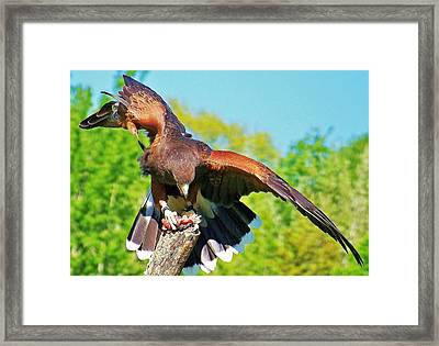 Framed Print featuring the photograph Dinner... by Al Fritz