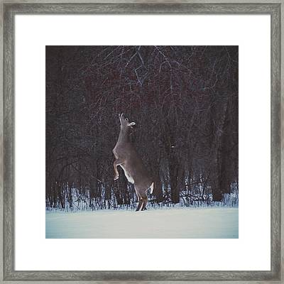 Dinner Hunt Framed Print by Nikki McInnes
