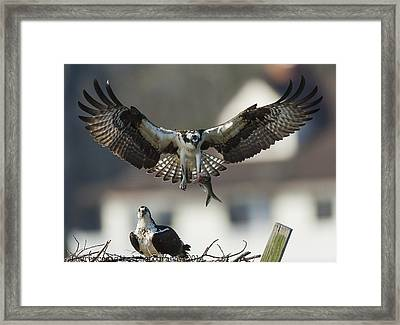 Dinner Is Severed  Framed Print by Glenn Lawrence