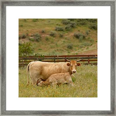 Dinner Time Framed Print by Art Block Collections