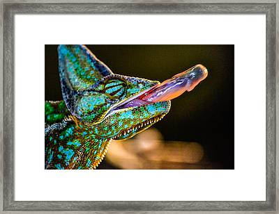 Dinner Time Framed Print by Robin Williams
