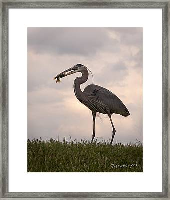 Dinner Time Framed Print by Terri Harper