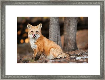 Dinner Was Good Framed Print by John Wadleigh