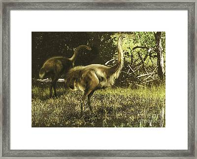 Dinornis Maximus Flightless Birds Framed Print