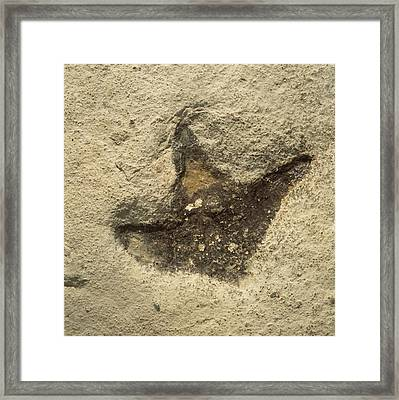 Dinosaur Footprint Fossil Framed Print by Natural History Museum, London/science Photo Library