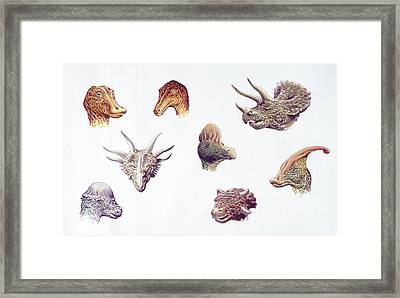 Dinosaur Heads Compared Framed Print by Deagostini/uig