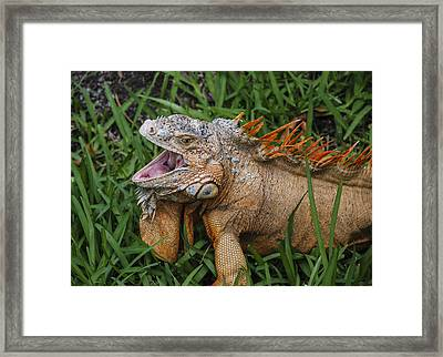 Framed Print featuring the photograph Dinosaur by Phil Abrams