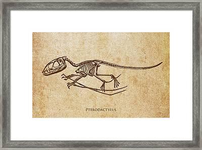 Dinosaur Pterodactylus Framed Print by Aged Pixel
