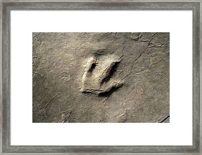 Dinosaur Track (eubrontes) Framed Print