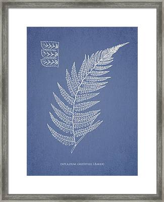 Diplazium Griffithii Framed Print by Aged Pixel