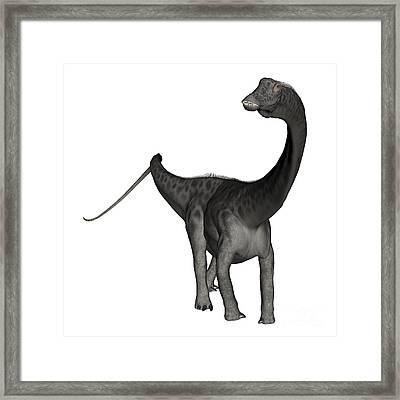 Diplodocus Dinosaur Framed Print by Elena Duvernay