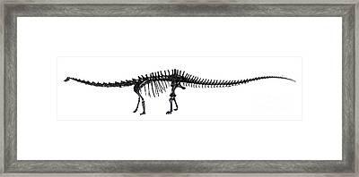 Diplodocus Dinosaur, Fossil Skeleton Framed Print by Natural History Museum, London