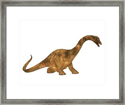 Diplodocus Dinosaur Framed Print by Friedrich Saurer