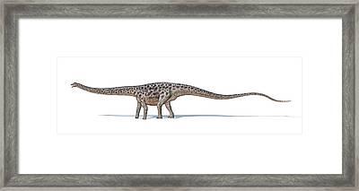 Diplodocus Dinosaur Framed Print by Leonello Calvetti