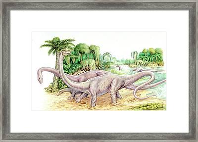 Diplodocus Dinosaurs Framed Print by Deagostini/uig