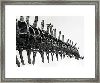 Diplodocus Tail Bones Framed Print by Dorling Kindersley/uig