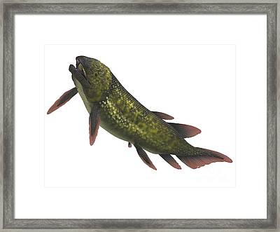 Dipterus Is An Extinct Freshwater Framed Print