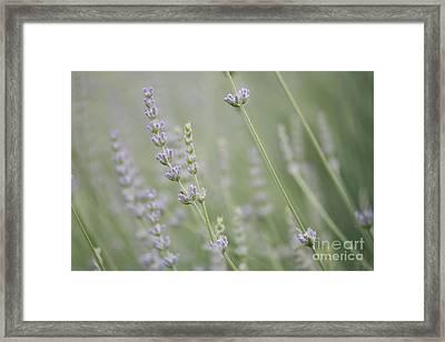 Direction .... Framed Print