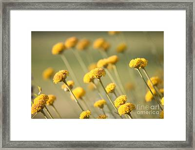 Direction In Yellow..... Framed Print by Lynn England