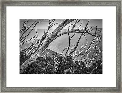 Directions Of The Forest Framed Print by Mark Lucey