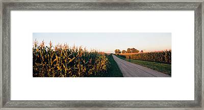 Dirt Road Passing Through Fields Framed Print by Panoramic Images