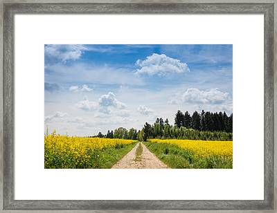 Dirt Road Passing Through Rapeseed Framed Print by Panoramic Images