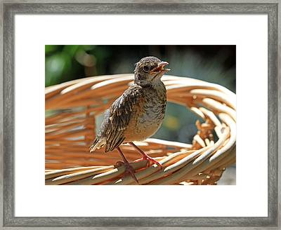 Dirty Laundry Framed Print by Donna Kennedy