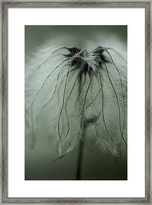 Discarded Dreams Framed Print
