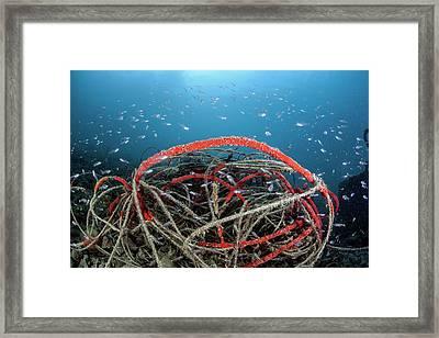 Discarded Fishing Line Framed Print
