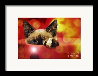 Andee Design Animal Framed Prints