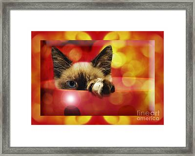 Disco Kitty 2 Framed Print